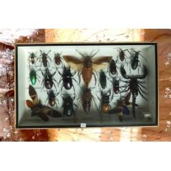 Teca con insetti